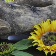 berck abeilles et scarabe