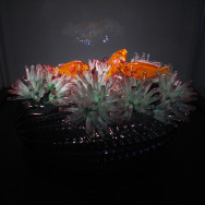 berck anemones avec poissons clown