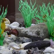 berck acquarium 2