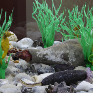 berck aquarium 2