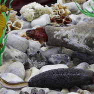 berck aquarium 3