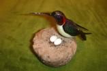 Oiseau-mouche sur le nid