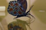 Papillon avec murrine