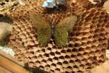 Farfalla con murrine ad ali aperte