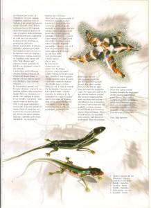 vetro magazine 2001 - 3
