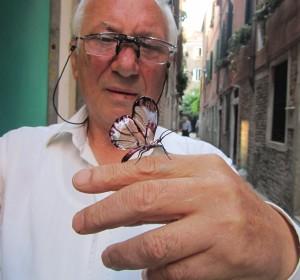 Farfalla con ali di vetro
