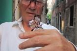 Papillon avec ailes de verre