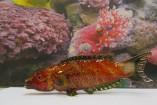Tropical-fish-157x105
