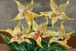 orchidee1-157x105