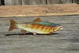 pesce21-157x105