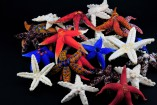 sea_stars-157x105