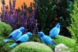 uccello_azzurro1-157x105